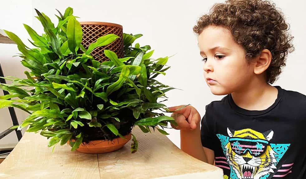 必要なのは水だけ。鉢の外側で観葉植物を育てる次世代のプランター
