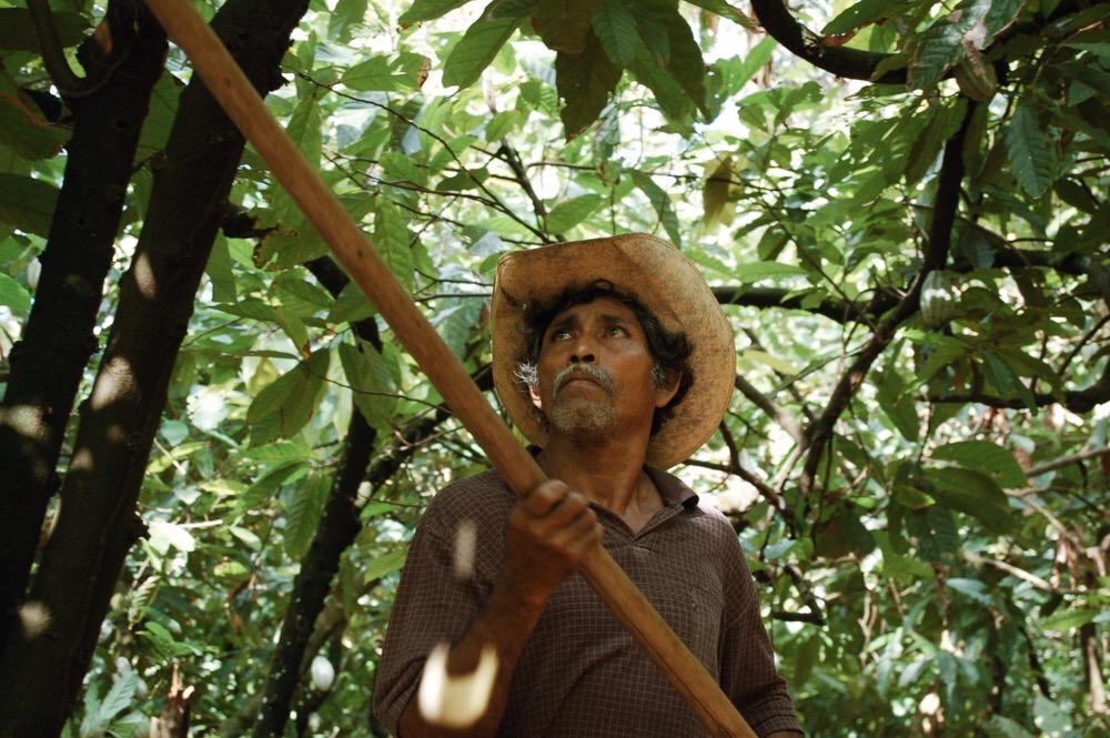 森の生態系を保ちながら作物を栽培する「アグロフォレストリー」