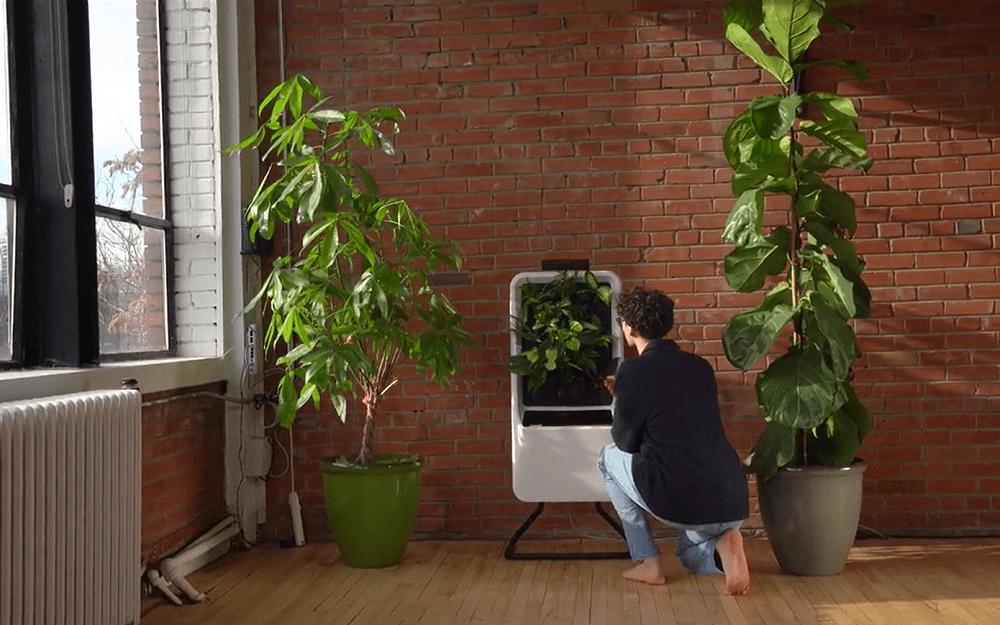 部屋の空気を浄化する、水耕栽培のスマートガーデン「Respira」