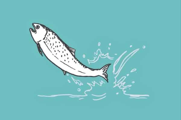 ダムと魚の共存で生態系を守る。鮭を川の上流に高速輸送させる「Fish Passage」