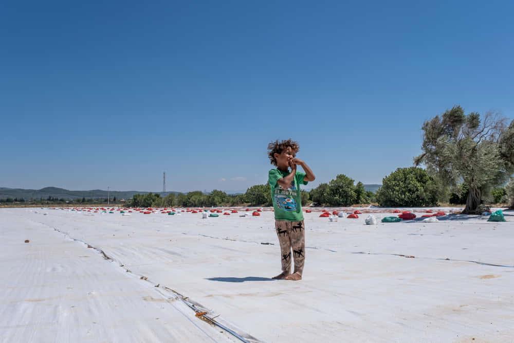 シリア難民キャンプでの自給自足に道ひらく。マットレスをつかった水耕栽培
