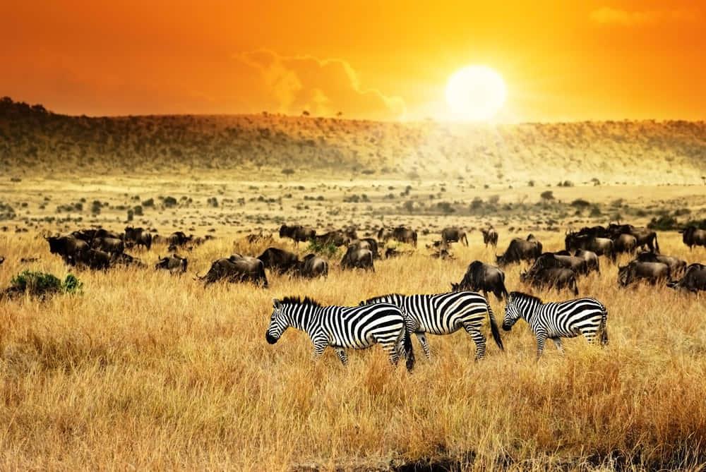 ケニア発、入力時に自国の観光名所を学べるアクセス認証「Captcha」