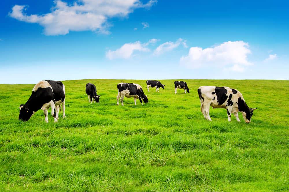 エネルギー削減。牛のフンからつくる服「Mestic」