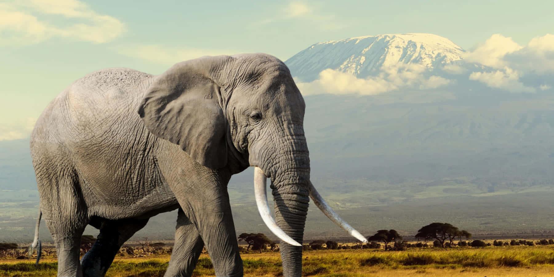 象を絶滅から守る。身につけて訴えるジュエリー「Tiffany Save the Wild」コレクション