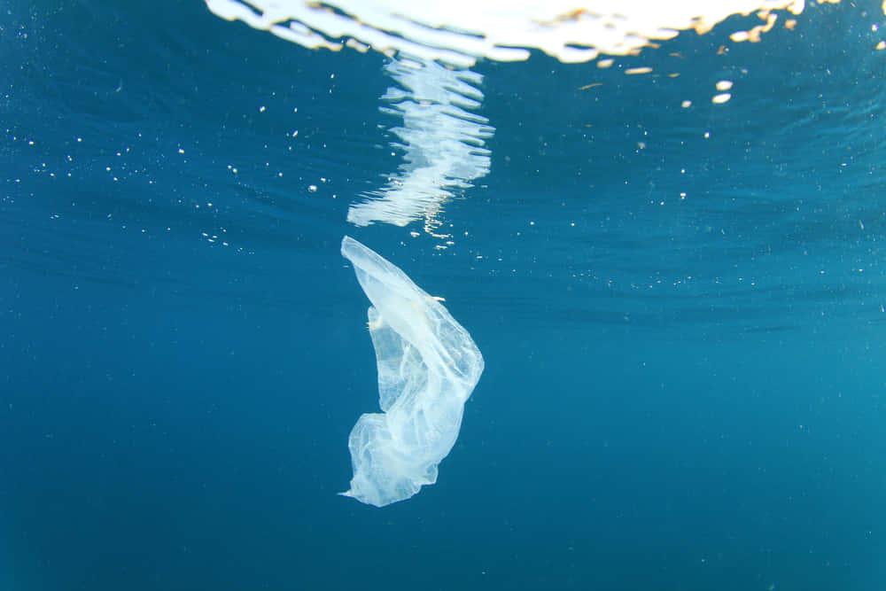 チリの起業家が開発した、水に溶けるプラスチック袋「SoluBag」