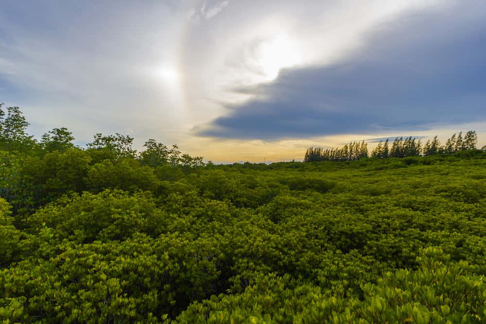 ドローン植林がマングローブを救う。ミャンマーで始まる森林保護のイノベーション