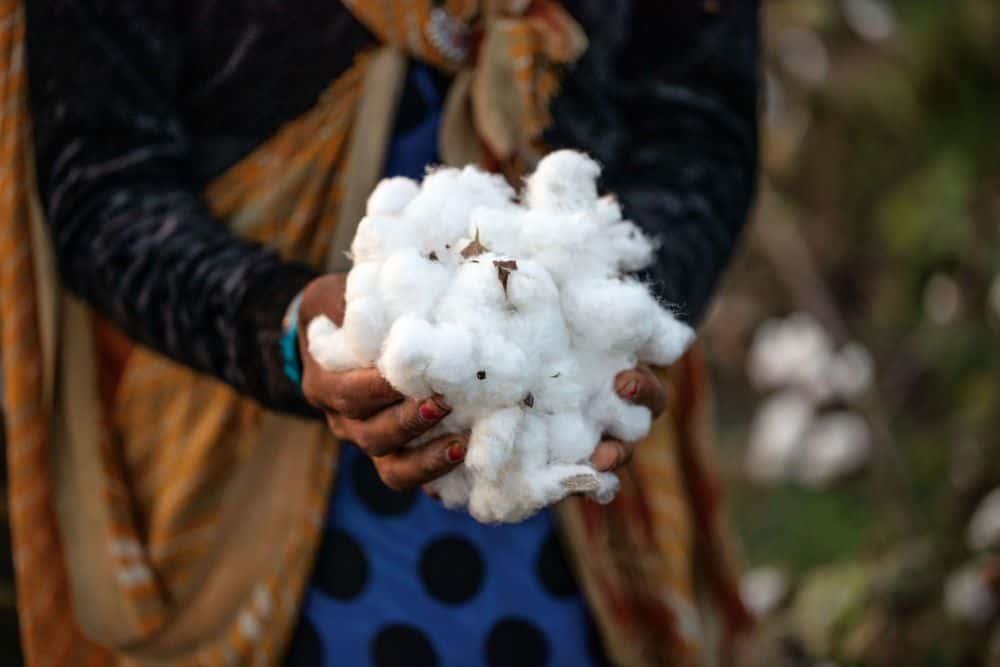 パタゴニアのリジェネラティブ・オーガニック農業を活用したTシャツ